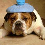 Durerile de cap și cum reușesc ele să ne strice ziua!