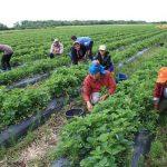 Parlamentul italian a decis: până la 8 ani închisoare pentru cine exploatează muncitorii în agricultură!