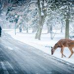 """Poezia zilei: """"Iarna"""" – Vasile Alecsandri"""