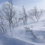 "Poezia zilei: ""Azi ninge tare, draga mea"" – Alexandru Andrieş."