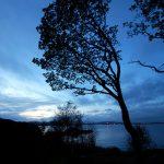 """Poezia zilei: """"Visez un cer tăcut"""" – Dan Botta."""