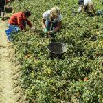Taranto – un grup de muncitori români exploatați în condiții inumane și fără plată timp de trei luni