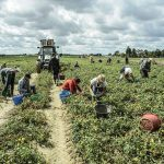 Ragusa – delegația de la București a avut discuții la fața locului cu muncitorii români care lucrează în agricultură