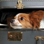 Condițiile în care poți călători cu un animal de companie în UE cu mașina proprie, cu avionul sau cu trenul