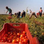 Fermele agricole din sudul Italiei și exploatarea ilegală a imigranților, în atenția autorităților italiene