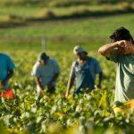 Imigranții – talpa de jos a societății italiene? Munci grele și umilitoare, salarii mici, contracte de muncă part-time sau inexistente